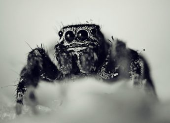 Spiders could eat all humans on Earth in one year