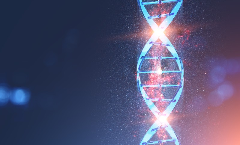Technology now permits scientists to cut and splice entire chromosomes for gene editing