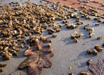 Half a billion bees died in Brazil in just three months