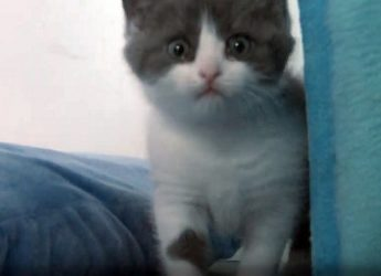 A man cloned his dead cat for $30,000, due to not overcoming his loss