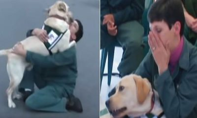 service dog 6
