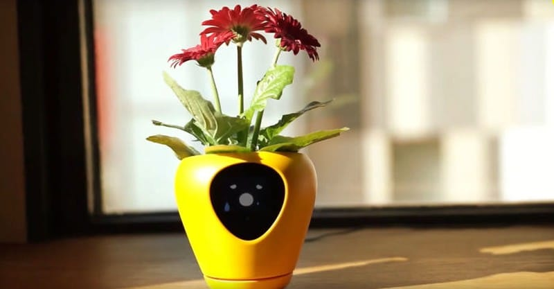 smart plant pot Lua