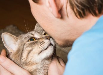 A new study suggests that cats bond with humans just as strongly as dogs