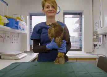 Inside St. Tiggywinkles, Europe's largest wildlife hospital