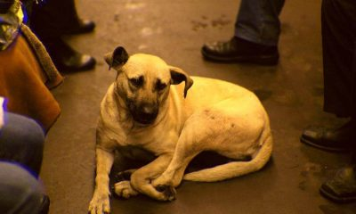 Stray dogs in Russia use the subway to commute regularly